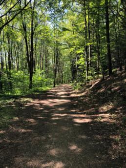 Kildebakken natur og skov